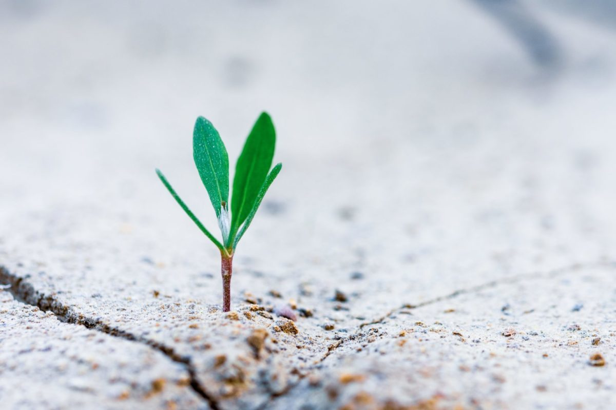 come fa crescere il profilo aziendale linkedin